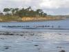 Marche aquatique sur la plage de Sainte-Anne