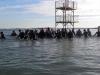 Groupe de marche aquatique